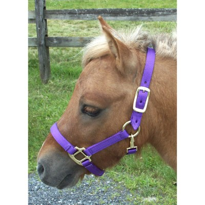Intrepid Miniature Horse Nylon Halter