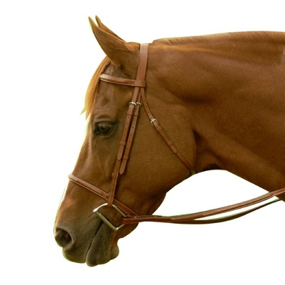 Exselle Elite Fancy Square Raised Bridle