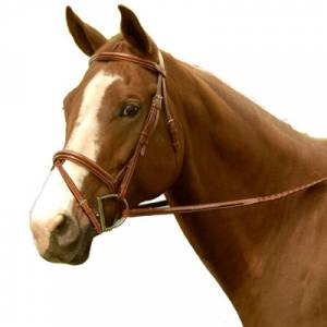 Exselle Elite Fancy Raised Padded Pony Bridle