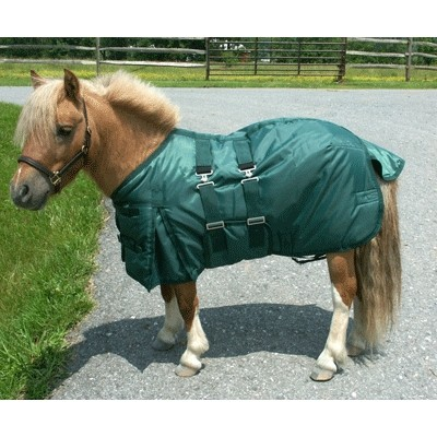 Mini Horse HW Turn Out Blanket