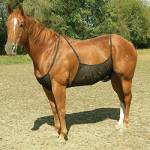 Cashel Horse Blankets, Sheets & Coolers