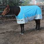 Professionals Choice Horse Blankets, Sheets & Coolers