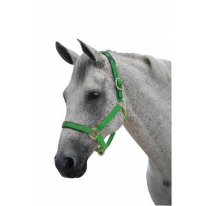 Roma Brights Breakaway Headcollar