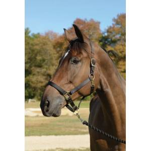 Shires Topaz Leather Crown Safety Halter