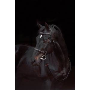 Amigo Deluxe Hunter Bridle