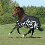 Bucas Buzz Off Rain Sheet - Zebra