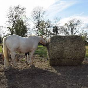 Tough 1 Round Bale Slow Feeder
