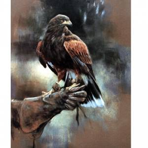 Sally Mitchell Fine Art Wildlife Prints - Harris Hawk
