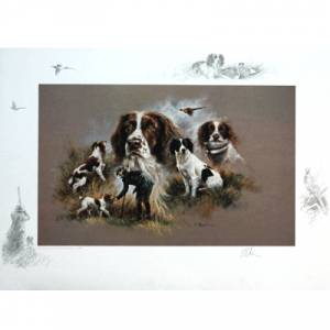Sally Mitchell Fine Art Dog Prints - Springer Spaniel