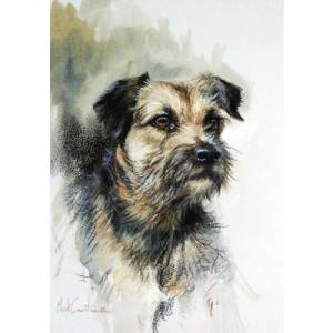 Sally Mitchell Fine Art Dog Prints - Border Terrier