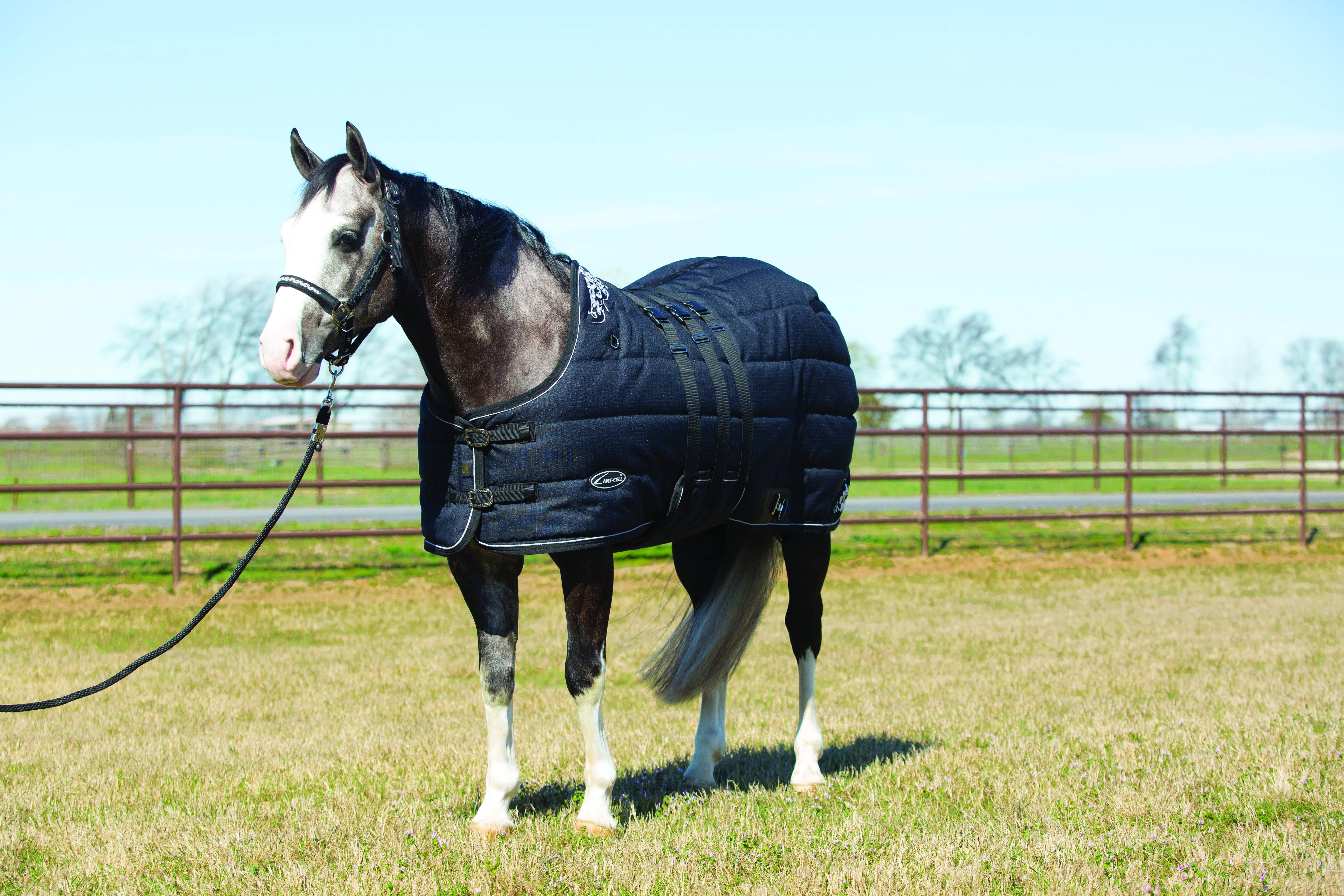 Cwell Equine New Mini Lightweight Turnout Shetland Rug Pony Foal No Fill Choice Of Sizes Colors 4 Feet 6 Inches Pink Xmas