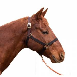Intrepid Poly Breakaway Halter