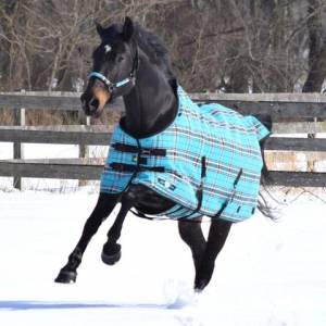 Kensington Signature SuperMesh Medium Weight Turnout Blanket