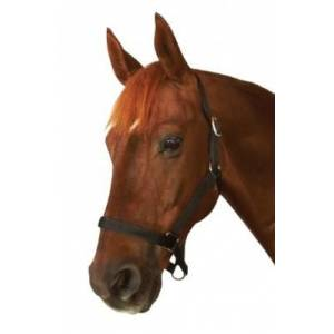 Roma Everyday Headcollar