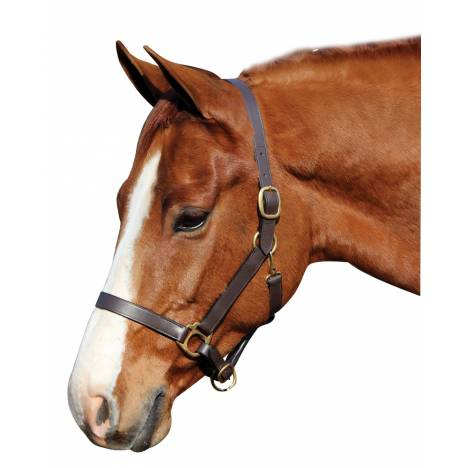 Henri De Rivel Advantage Leather Halter