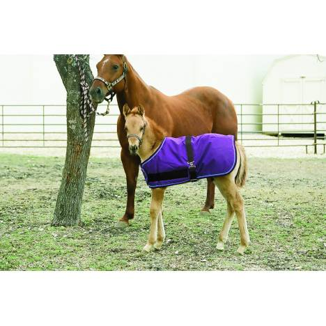 Kensington All Around Adjustable Medium Weight Blanket - Foal