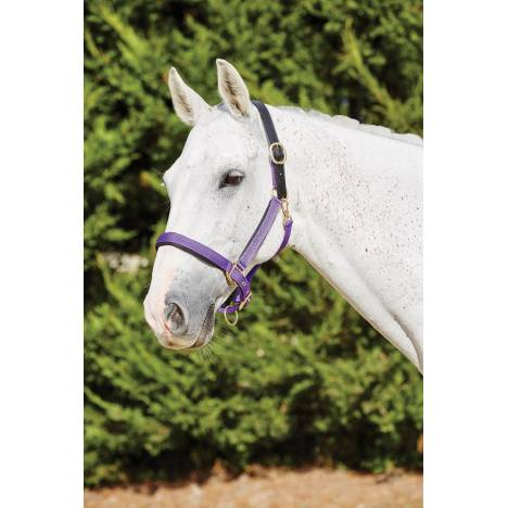 Kincade Deluxe Webbed Headcollar with Leather Crown