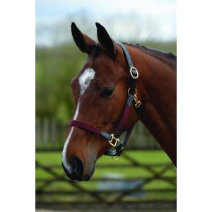 Kincade Leather Web Headcollar