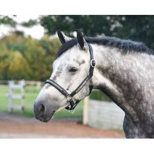 Perri's Silver Bling Padded Leather Halter