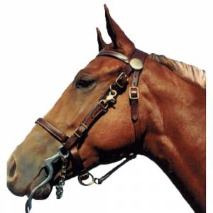 Shenandoah Leather Halter Bridle Combo