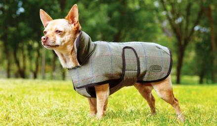 Weatherbeeta Dog Blankets