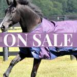 Horse Blankets & Sheets on Sale