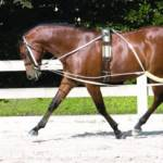 Horse Training Aids