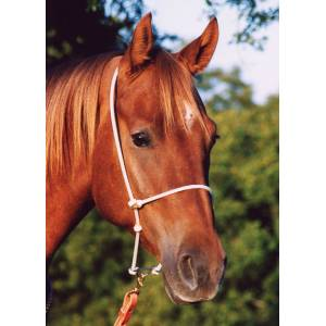 Martin Saddlery Rope Headset Tiedown