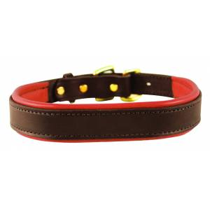 Perris Padded Leather Dog Collar