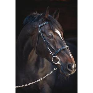 Amigo Leather Bridle