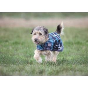 Shires Equestrian  Waterproof Dog Coat