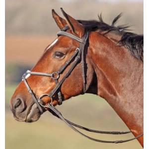 Shires Phoenix Figure 8 Bridle