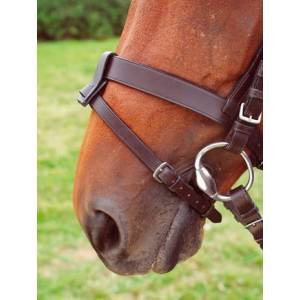 Shires Flash Attachment Loop