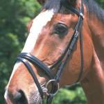 Stubben English Horse Tack